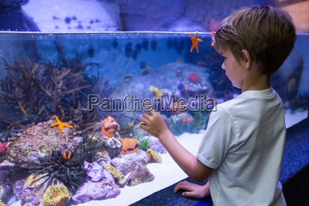young man looking at starfish