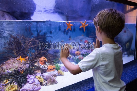 young man touching a starfish tank