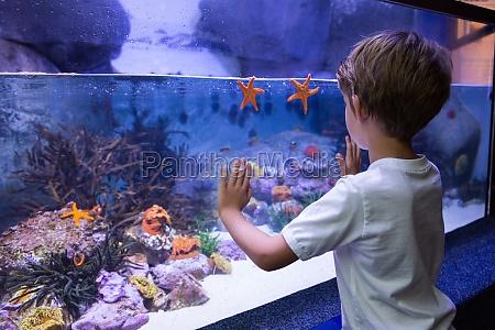 young, man, touching, a, starfish-tank - 15582570