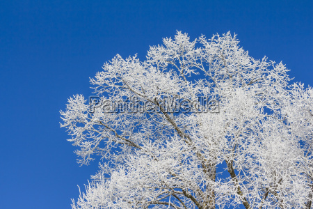 white winter wonderland with blue sky