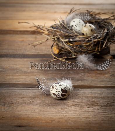 quail eggs in nest on wooden