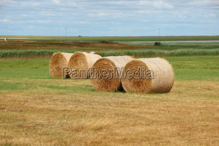 round straw bales in meadow landscape