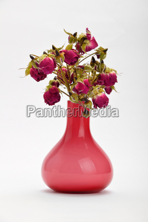 dried red roses in pink vase