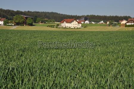 field at zandt