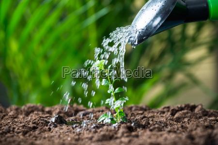 water being poured on plants from