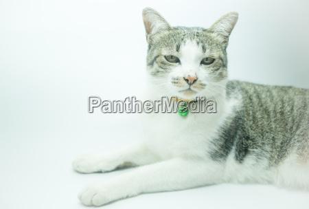 cute cat portrait wearing a securitiy