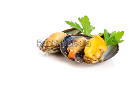 boiled, mussels - 15784794