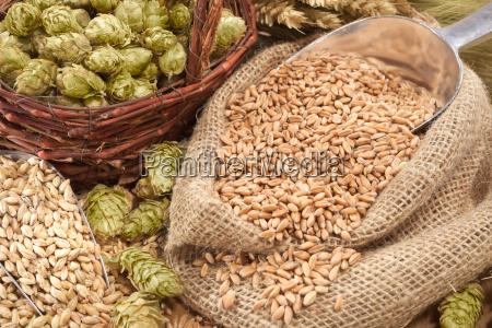 beer, ingredients - 15786234