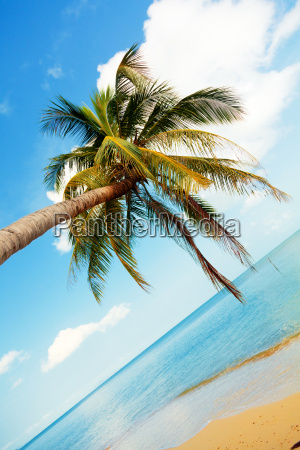 koh, samui, beach, koh, samui, beach, koh, samui - 15793085