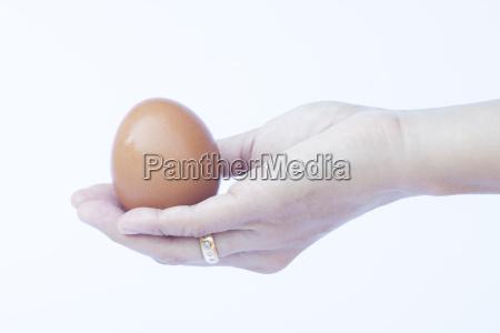 hand, holding, egg, isolated, on, white - 15794337