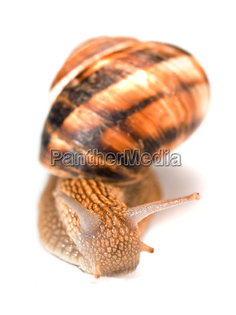 snail, isolated, snail, isolated, snail, isolated, snail, isolated - 15795889