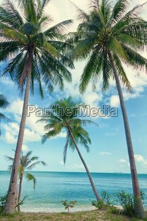 koh, samui, beach, koh, samui, beach, koh, samui - 15801475