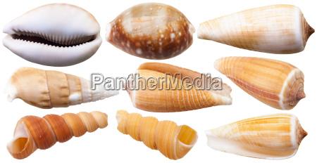 set of mollusc shells of sea