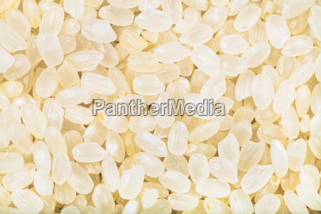 short grain uncooked white italica rice