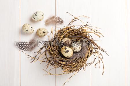 wachteleier in nest on wooden background