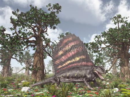 pelycosaur dimetrodon