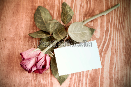 rose and blank card on wooden