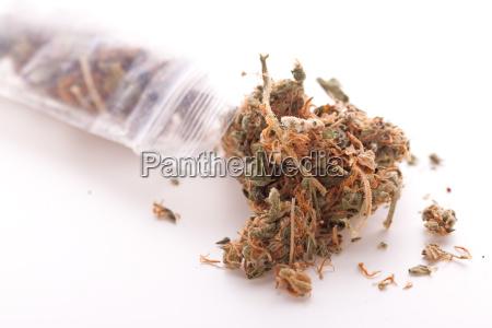 cannabis marijuana blooms in small bag