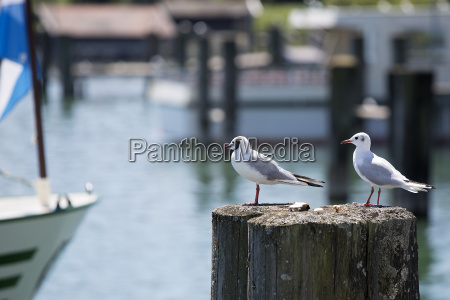 sea gulls sitting at a pier