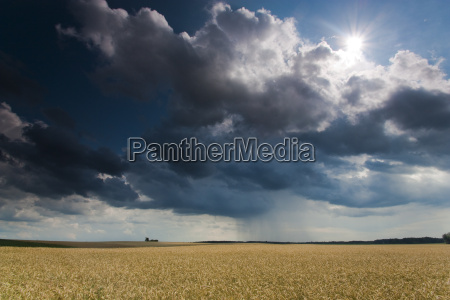 cereal field with a rising thunderstorm