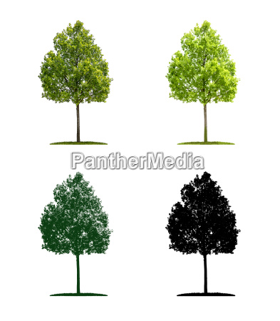 tree in four different illustration techniques