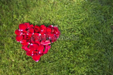 red heart from rose petals