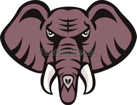 african elephant head angry tusk retro