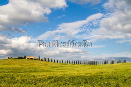 villa and cypress trees in tuscany