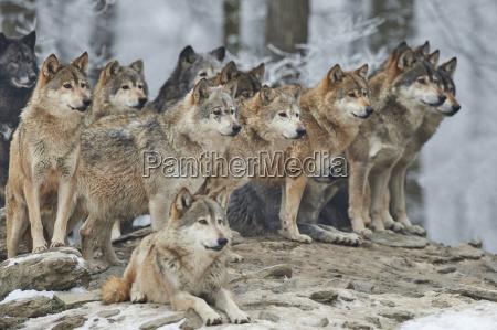 inverno animale freddo animali stati uniti