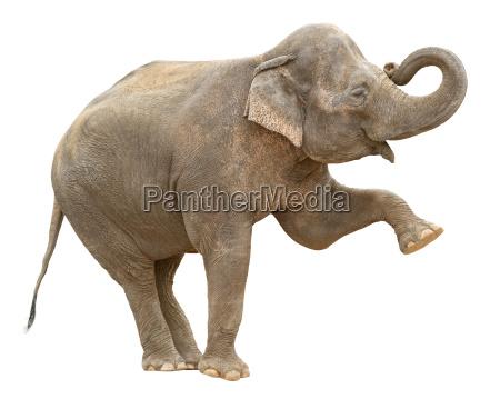 azjatycki slon kobieta wyciecie pozdrowienia