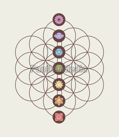 chakra icons on flower of life