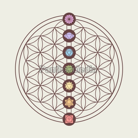 chakra icons on sacred geometry design