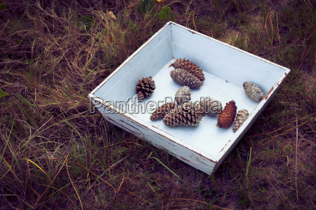 vintage box of pine cones in