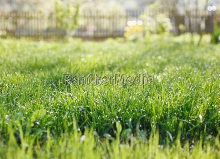 garden with grass