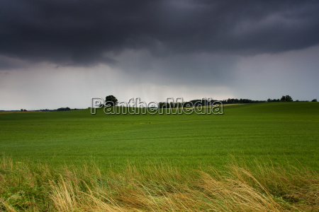 abziehendes thunderstorm on a meadow with