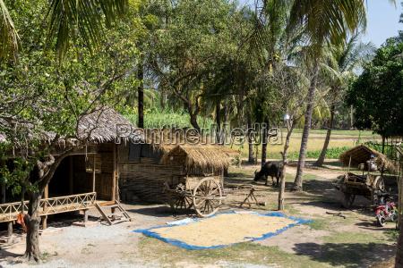 cambodian farm