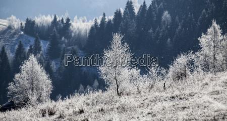 la escarcha paisaje de invierno cubierto