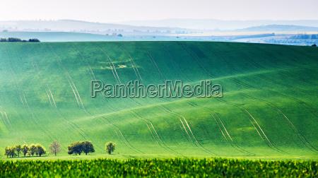spring fields green waves czech moravia