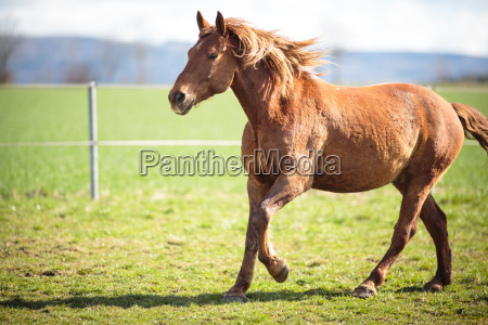 horse running on field