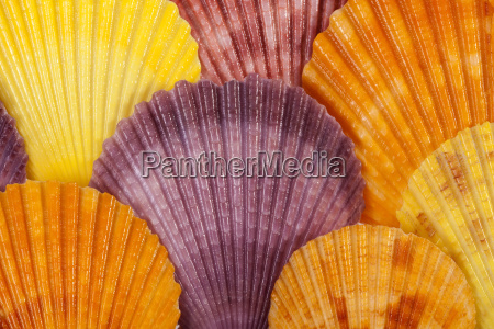 background with colorful sea shells of