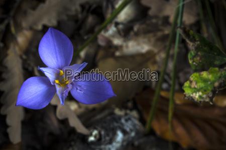 folha flor planta lindas flores inflorescencia