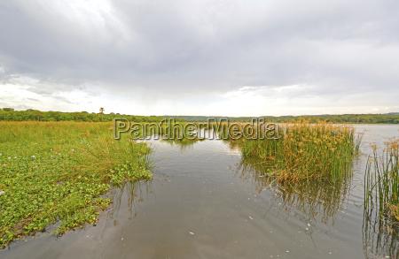 marshland on a wild river