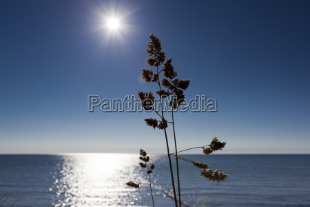 grasses on the beach of the