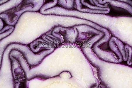 background of cut red cabbage abstraction