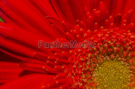 red flower detail view