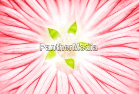 beautiful, pink, flower, background - 16325933