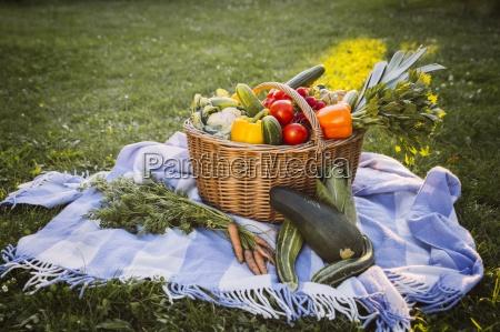 germany northrhine westphalia bornheim vegetable basket