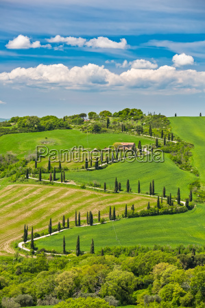 beautiful, landscape, in, tuscany, with, curved - 16338361