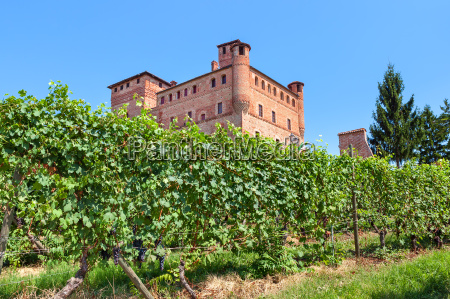 vineyards of grinzane cavour in italy