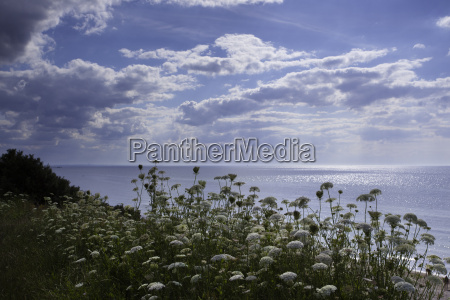 baltic sea in summer with sun